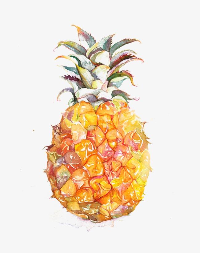 手绘彩色菠萝凤梨