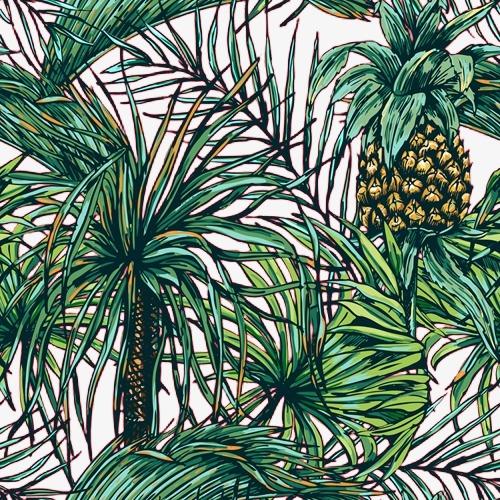 手绘菠萝树