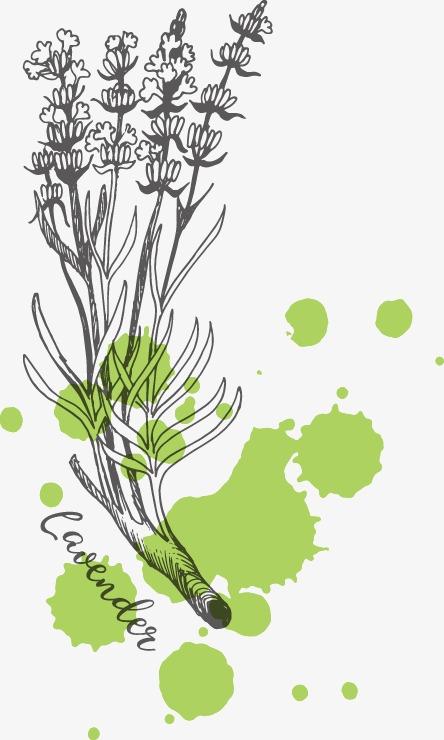 水彩手绘花草装饰