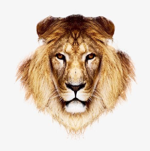 动物头 狮子 凶猛 狮子头             此素材是90设计网官方设计