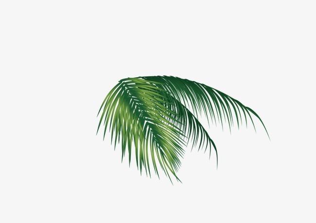 椰子树叶子