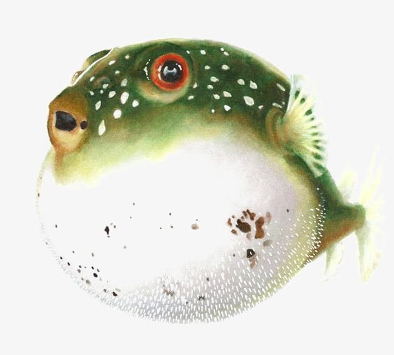 图片 > 【png】 河豚  分类:手绘动漫 类目:其他 格式:png 体积:0.