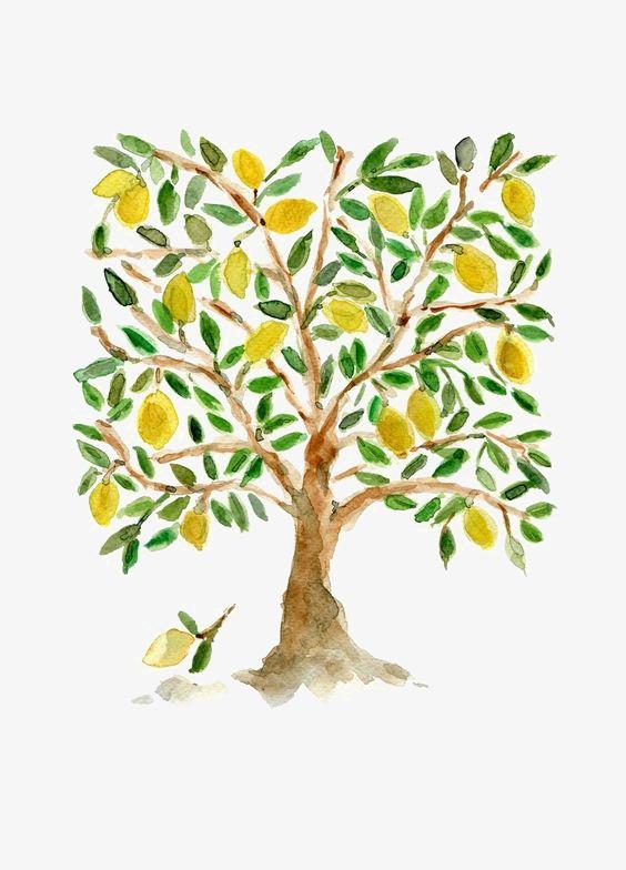 图片 > 【png】 柠檬树  分类:手绘动漫 类目:其他 格式:png 体积:0.
