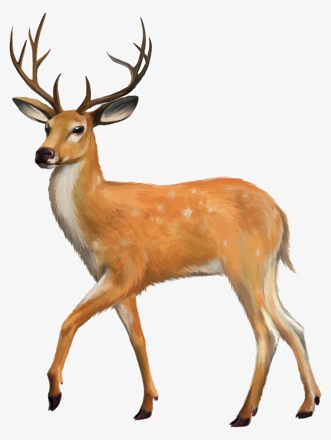 卡通手绘麋鹿