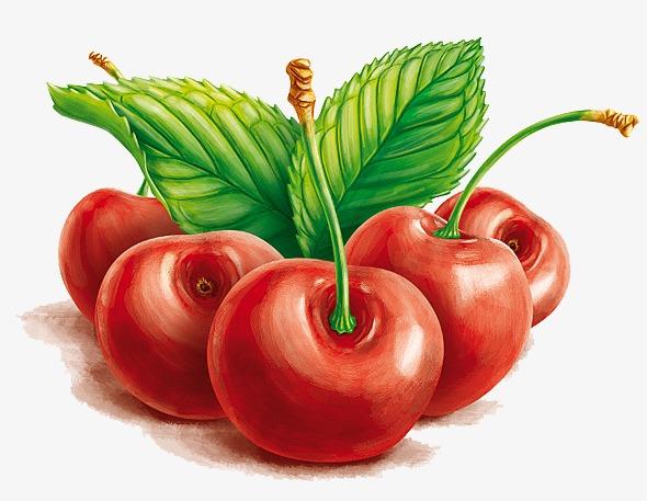手绘水果樱桃