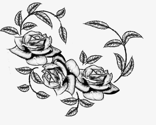素描花卉图片