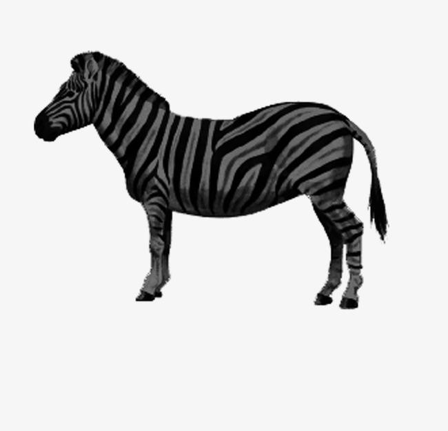 动物 手绘黑白 斑马