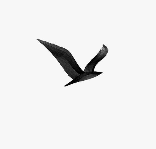 动物 手绘黑白 海鸥