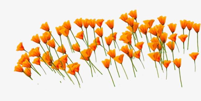 90设计提供高清png手绘动漫素材免费下载,本次矢量橙色花朵花海作品为
