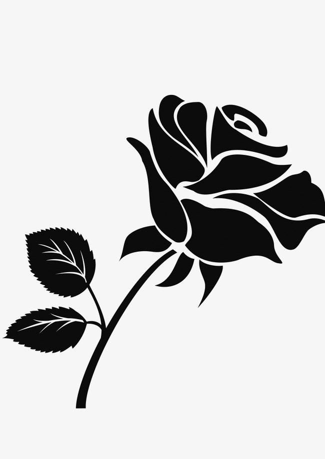 玫瑰 植物 黑白