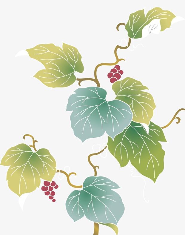 卡通葡萄藤葡萄叶素材图片