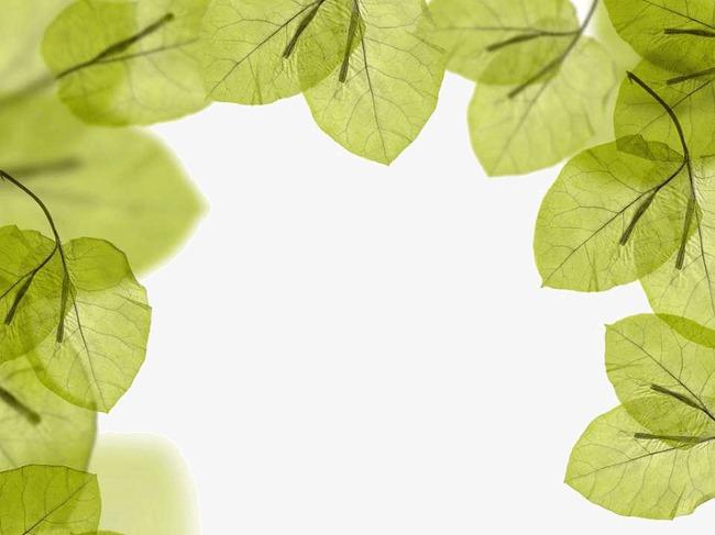绿色叶子ppt背景图片