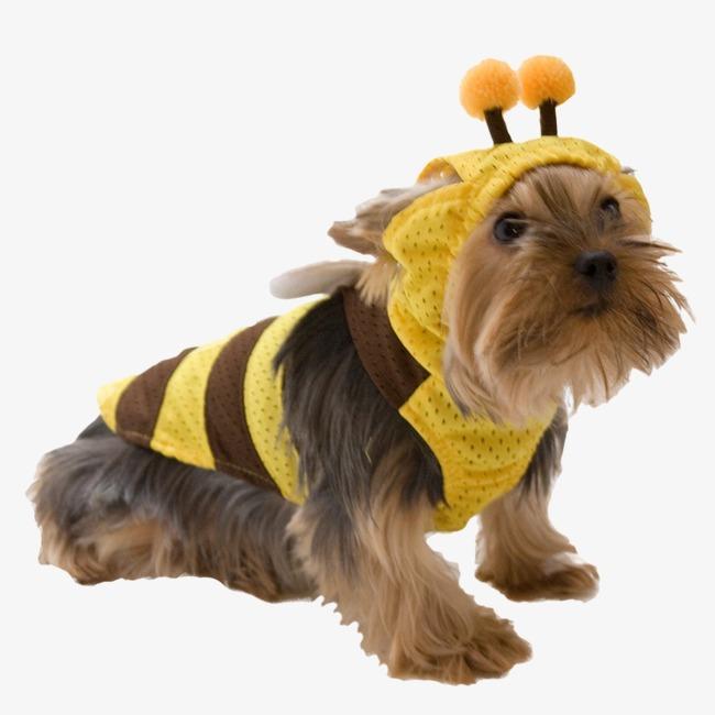可爱穿衣服的狗狗