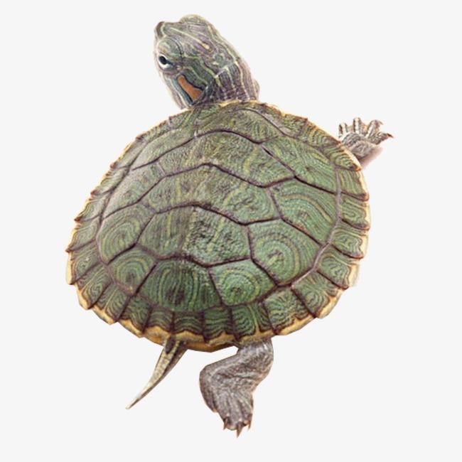 乌龟动物的思维导图