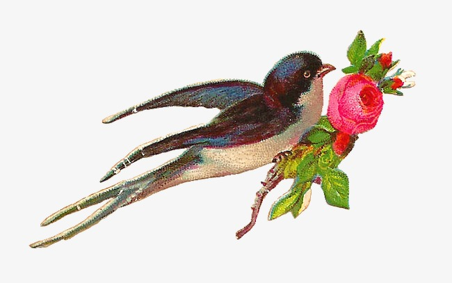 动物 小鸟 燕子 花卉 花朵 玫瑰 红色 手绘             此素材是90