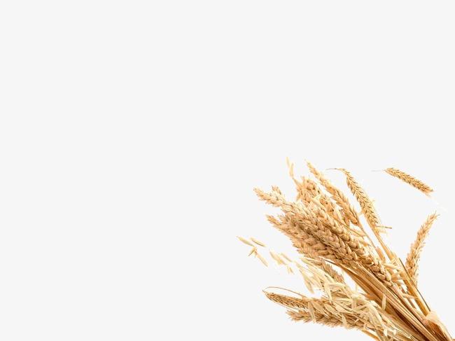 一粒麦子前奏简谱