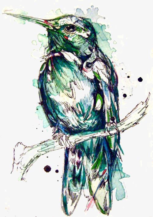 图片 > 【png】 蜂鸟  分类:手绘动漫 类目:其他 格式:png 体积:0.