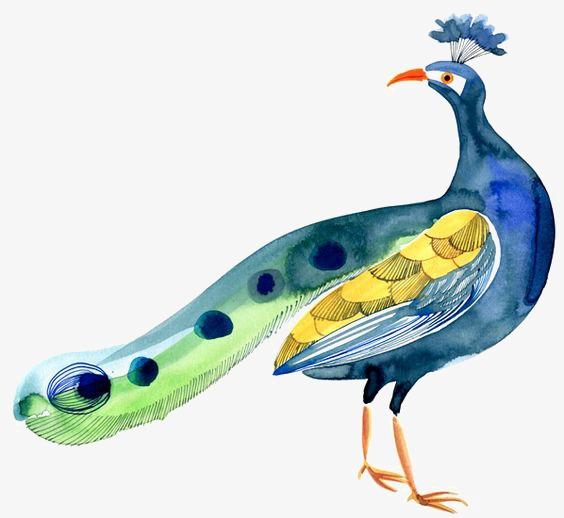 手绘孔雀 卡通孔雀 水彩孔雀 动物             此素材是90设计网