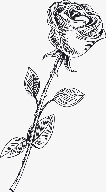 矢量手绘玫瑰花