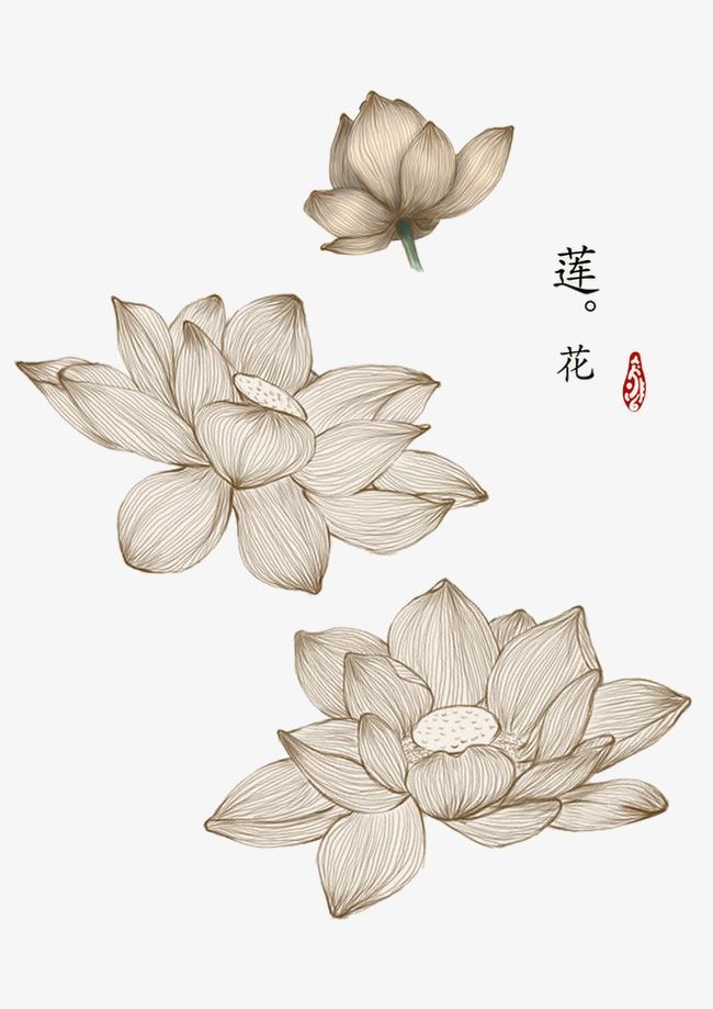 手绘线条中国风睡莲