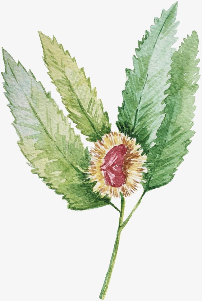 图片 水彩插画 > 【png】 水彩植物  分类:手绘动漫 类目:其他 格式