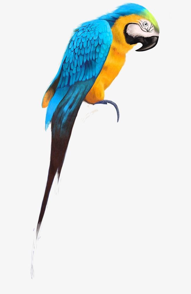 图片大全动物鹦鹉