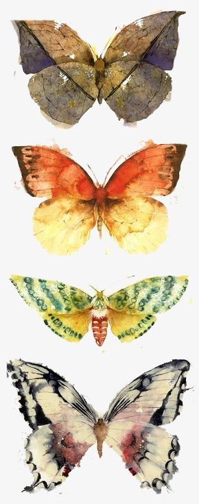 图片 > 【png】 枯叶蝶  分类:手绘动漫 类目:其他 格式:png 体积:0.