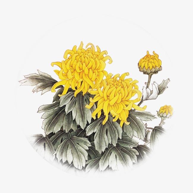 水墨黄色菊花秋菊
