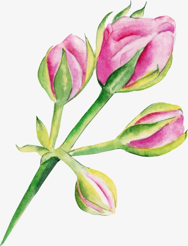 图片 玫瑰花苞 > 【png】 玫瑰花苞  分类:手绘动漫 类目:其他 格式