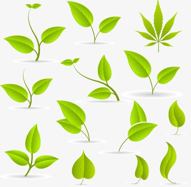 树叶各异的庭院元素【高清装饰素材png样式】-90设计形态花园创意草坪设计图片