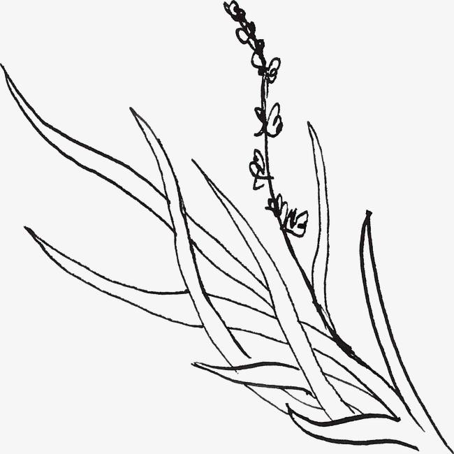 图片 > 【png】 线描薰衣草  分类:手绘动漫 类目:其他 格式:png 体积