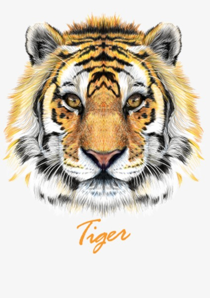 老虎 头 动物             此素材是90设计网官方设计出品,均做版权