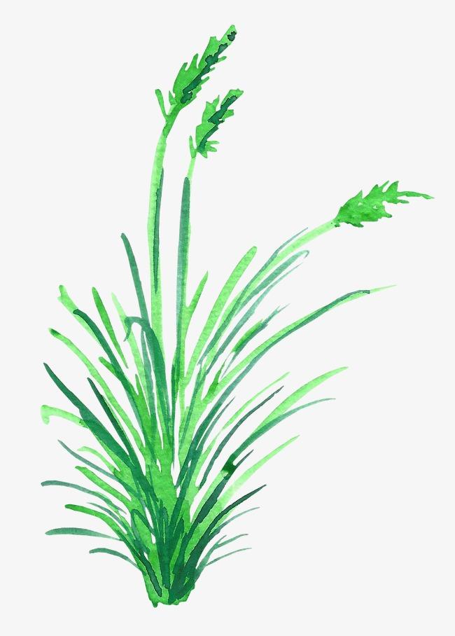 手绘绿色草丛