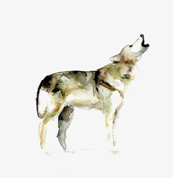 水彩手绘狼
