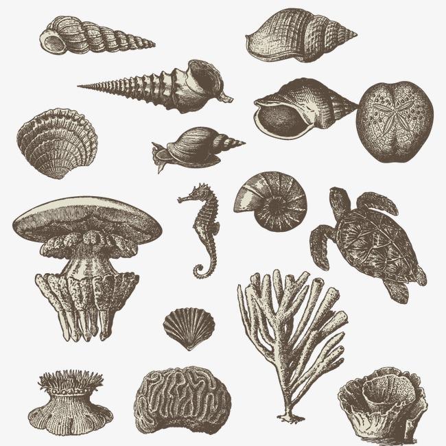手绘海底小动物及植物