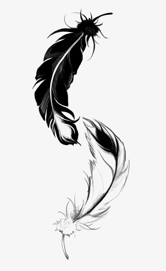 图片 > 【png】 黑白羽毛  分类:手绘动漫 类目:其他 格式:png 体积