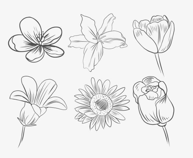 手绘花卉线稿