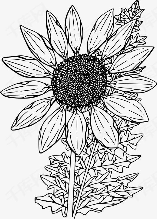 手绘向日葵秘籍花朵葵花籽