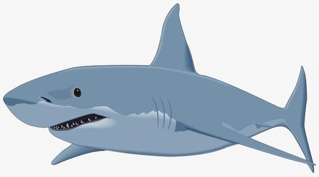 图片 > 【png】 手绘鲨鱼  分类:手绘动漫 类目:其他 格式:png 体积:0