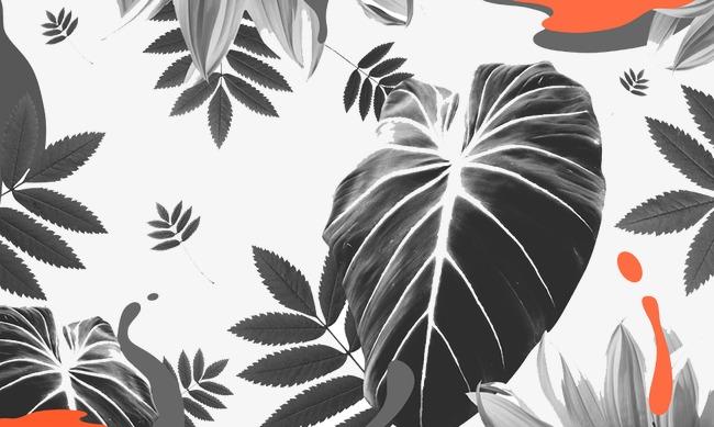 素描树叶图片