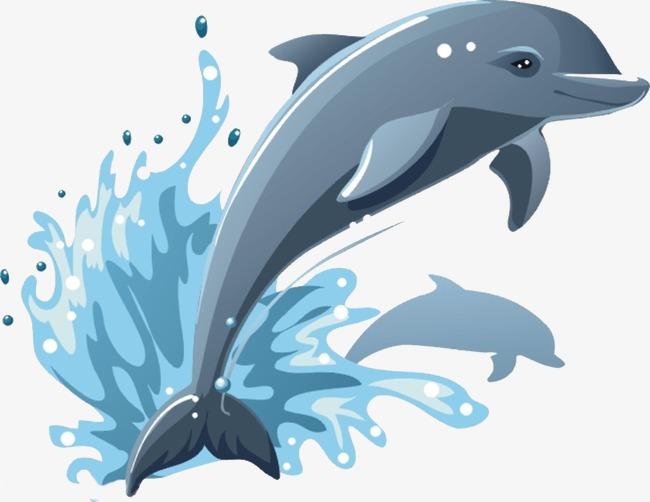 鲸的结构图