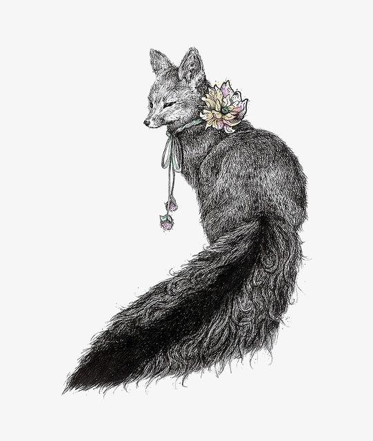 手绘黑白狐狸