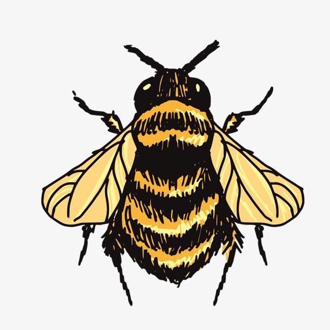 图片 > 【png】 苍蝇  分类:手绘动漫 类目:其他 格式:png 体积:0.