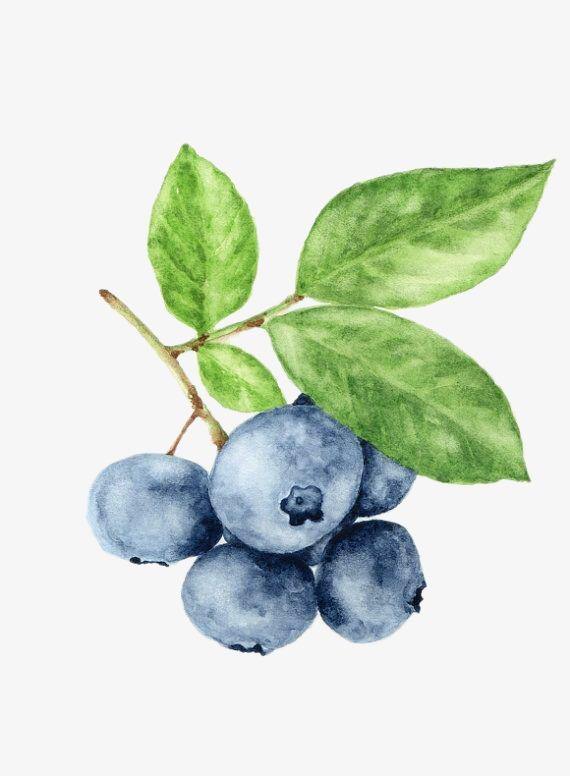 蓝莓手绘设计黑白