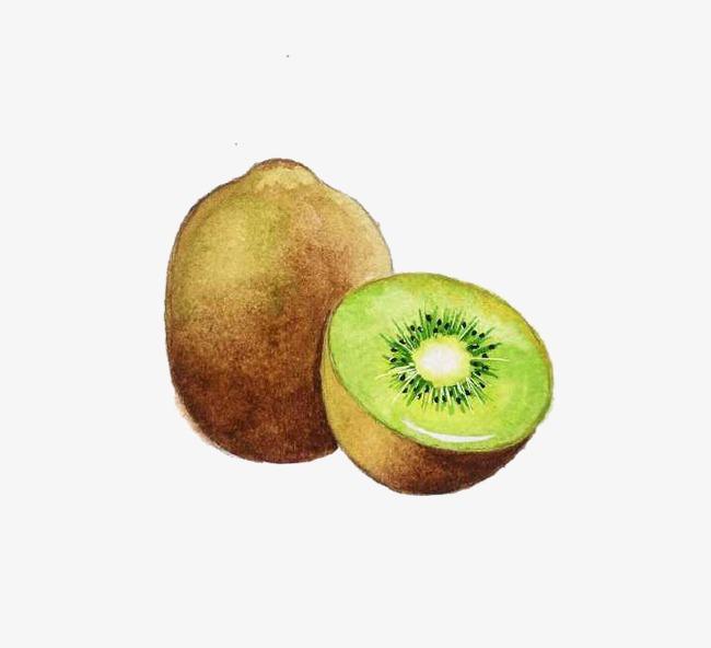 手绘猕猴桃