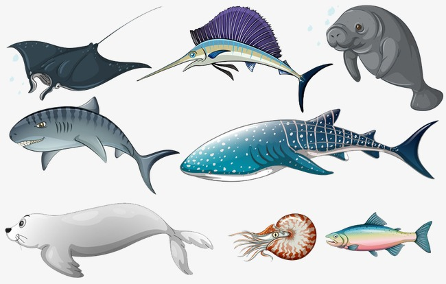 手绘海洋生物合集