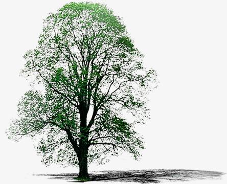 小树 倒影 装饰 素材 槐树叶小树 倒影 装饰 素材 槐树叶png免费下载图片