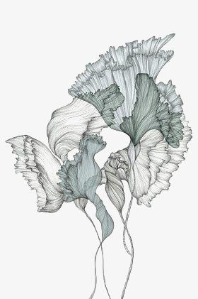 手绘花卉素材图片免费下载 高清png 千库网 图片编号3924009图片
