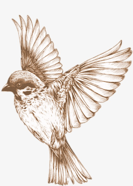 老鹰 翅膀 单色 手绘