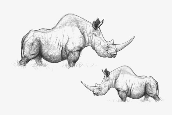 图片 > 【png】 犀牛  分类:手绘动漫 类目:其他 格式:png 体积:0.
